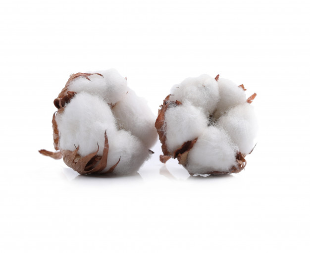 Global market surges: Cotton exports may increase 30%